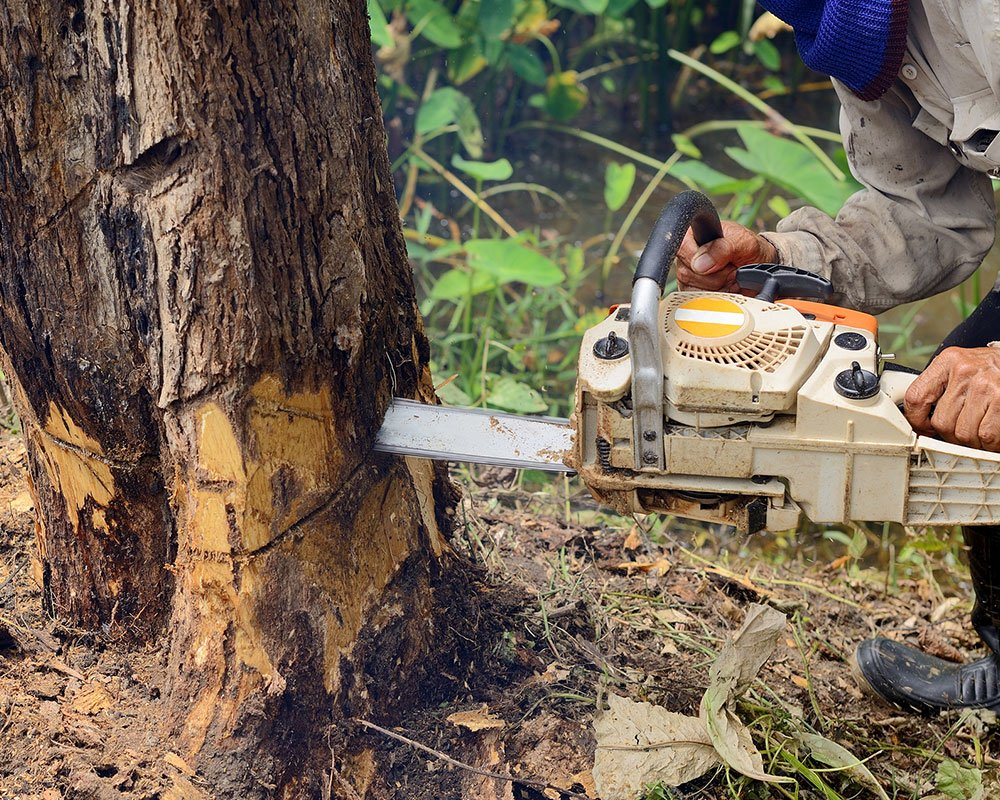 Tree Service Seattle - Tree Removal