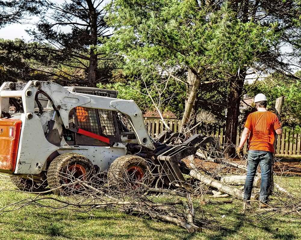 Tree Service Seattle - Arborist