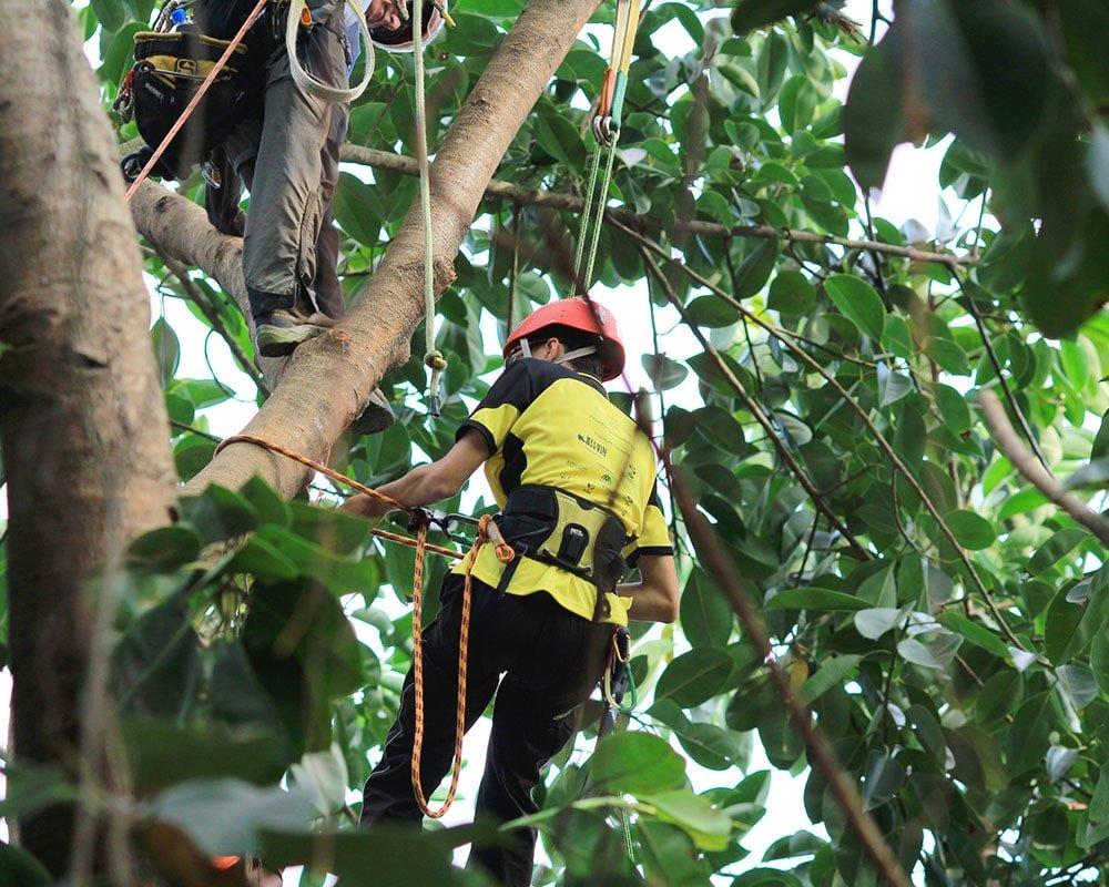 Tree Service Seattle - Emergency Tree Removal