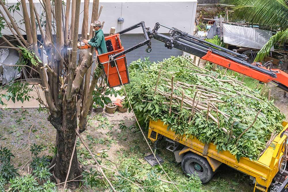 Tree Service Seattle - Tree Pruning